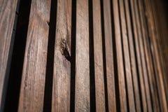 Wood textur med lodlinjebräden i perspektiv Royaltyfria Foton