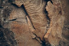 Wood textur och bakgrund Klipp textur för trädstammen Makrosikt av klippt textur och bakgrund för trädstam Royaltyfria Bilder