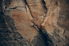 Wood textur och bakgrund Klipp textur för trädstammen Makrosikt av klippt textur och bakgrund för trädstam Arkivbild