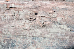 Wood textur som sett upp slut med massor av detalj royaltyfri bild