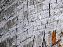 Wood textur, tappningbakgrund Royaltyfria Foton