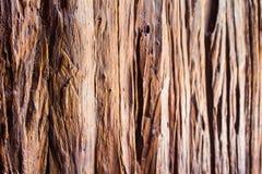 Wood textur, Wood yttersida gammala paneler för bakgrund Arkivbild