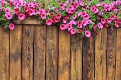 Wood texturbakgrund för blommor Fotografering för Bildbyråer