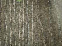 Wood texturbakgrund för laminat Royaltyfri Fotografi