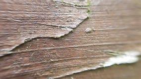 Wood texturbakgrund för makro Fotografering för Bildbyråer