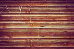 Wood texturbakgrund med växten som yttre växer Arkivfoto