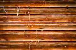 Wood texturbakgrund med växten som yttre växer Arkivfoton