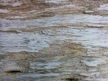 Wood texturbakgrund, träskrivbordtabell eller golv Royaltyfri Foto