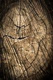 Wood texturbakgrund/Wood textur Arkivbilder