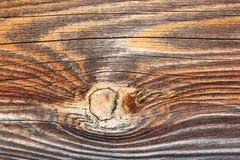 Wood texturdetalj för gran arkivfoto