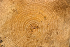 Wood texture. Nice wood texture with circles showing its age Stock Photos