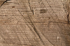 Wood texture. Wood cut texture of a log Royalty Free Stock Photos