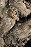 Wood texture. Old wood texture without treatment Stock Images
