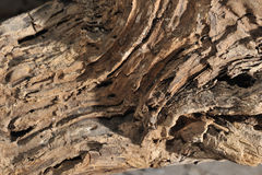 Wood texture. Old wood texture without treatment Royalty Free Stock Image