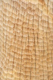 Wood texture. Texture of wood after elaboration Royalty Free Stock Photography