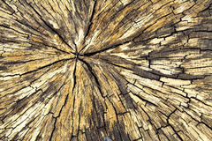 Wood texture. Yellow/beige old cracked wood texture Royalty Free Stock Images