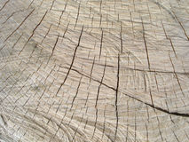 Wood texture. Wood Royalty Free Stock Photos