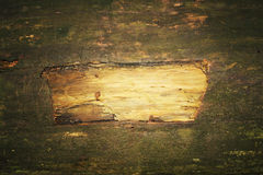 Wood texture. With natural patterns royalty free stock photography