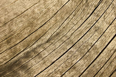 Wood texture. Part of a dead, dried out tree Stock Images