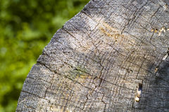 Wood texture. Pine tree texture close up Stock Photo
