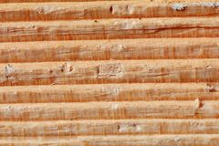 Wood texture. Macro of a wood texture Royalty Free Stock Photography