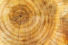 Wood texture Royalty Free Stock Photos