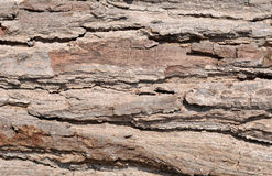 Wood Texture Royalty Free Stock Photos