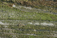 Wood texture. With a moss - macro Royalty Free Stock Photo