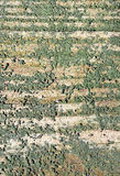 Wood texture. With a moss - macro Stock Photography