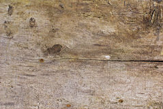 Wood texture. Weathered wooden cut texture backgrounds Royalty Free Stock Photography
