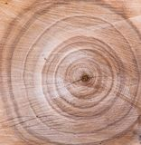 Wood texture, annual tree rings. Beautiful wooden background. Wood texture annual tree rings. Beautiful wooden background stock photos