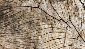 Wood texture of art by nature. Stock Photo