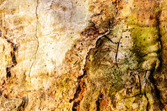Wood texture background Close-up of old dead wood that is stained and pitted with a rough textured surface. Stock Photo