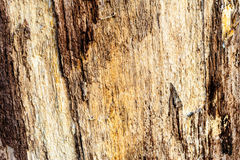 Wood texture background Close-up of old dead wood that is stained and pitted with a rough textured surface. Royalty Free Stock Photo