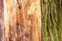 Wood texture background Close-up of old dead wood that is stained and pitted with a rough textured surface. Royalty Free Stock Image
