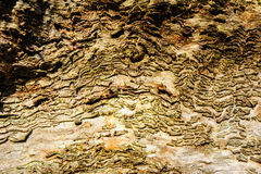 Wood texture background Close-up of old dead wood that is stained and pitted with a rough textured surface. Stock Image