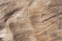 Wood texture. Texture of wood background closeup Stock Photos