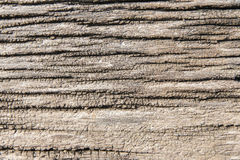 Wood texture. Texture of wood background closeup Stock Photo