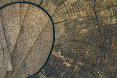 Wood texture and background. Cut tree trunk background in vintage style. Tree trunk close up. Macro view of cut tree trunk texture. Wood texture and background Royalty Free Stock Image