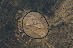 Wood texture and background. Cut tree trunk background in vintage style. Tree trunk close up. Macro view of cut tree trunk texture Royalty Free Stock Photography