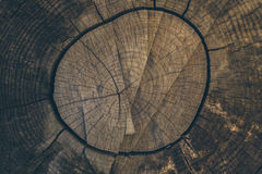 Wood texture and background. Cut tree trunk background in vintage style. Tree trunk close up. Macro view of cut tree trunk texture. Wood texture and background Royalty Free Stock Images