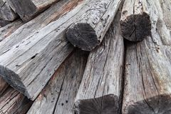 Wood texture background, cutted trees stock images