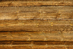 Wood texture background, different sizes of gnarls. Royalty Free Stock Photo