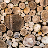 Wood texture background. Have many logs that cuted from big tree and small tree Royalty Free Stock Image