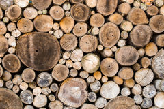 Wood texture background. Have many logs that cuted from big tree and small tree Stock Photography