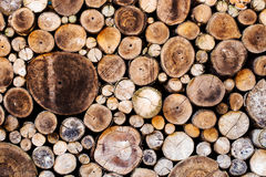 Wood texture background. Have many logs that cuted from big tree and small tree Royalty Free Stock Photos