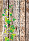 Wood texture background with leaf Royalty Free Stock Photos