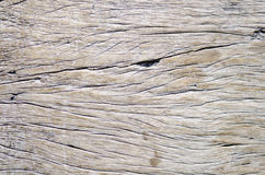 Wood Texture Background. Of old dead the tree Royalty Free Stock Photo