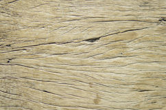 Wood Texture Background. Of old dead the tree Royalty Free Stock Photography