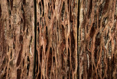 Wood texture. Background old panels , wood wall Royalty Free Stock Image